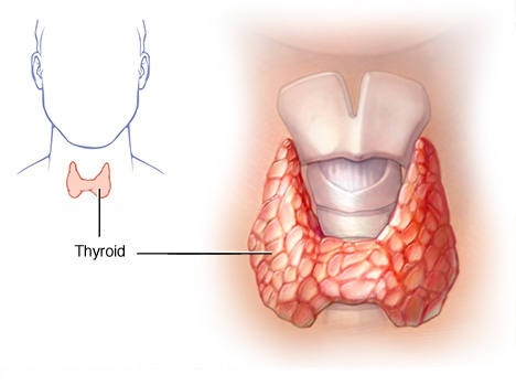 Your thyroid needs Medical attention, If you're experiencing these symptoms.