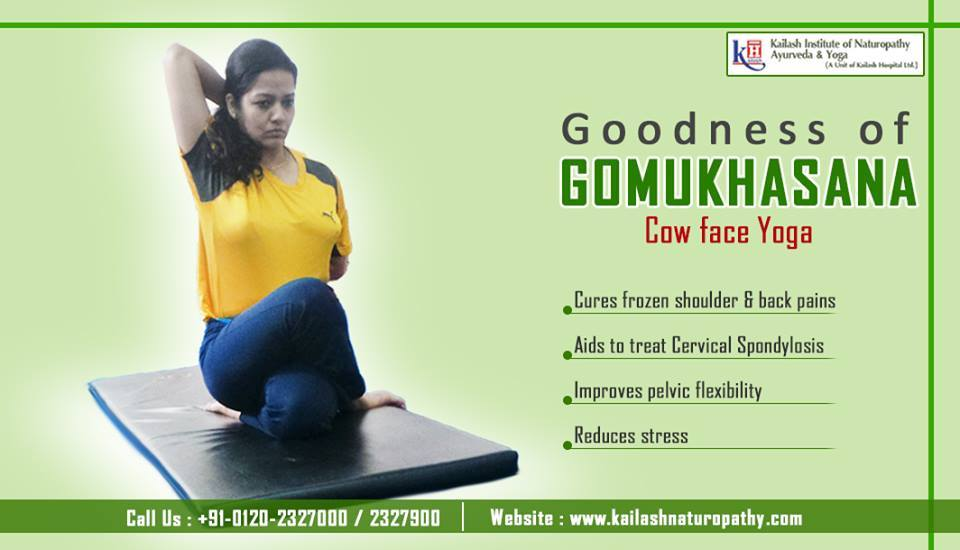 Gomukhasana helps to cure stiff shoulders, reduce backaches & aids in the treatment of spondylosis.