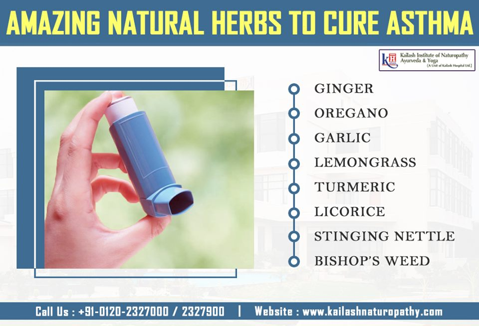 Know about the Natural herbs that can help relieve Asthma condition naturally rather depending on inhalers.